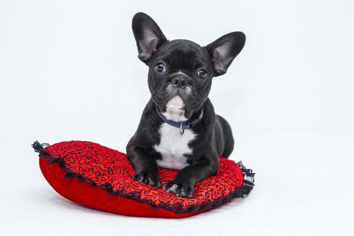 Quels sont les bienfaits d'une alimentation pour le chien?